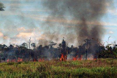 AMAZÔNIA em chamas! Governo corre para contratar monitoramento, mas MPF requisita informações sobre ações de combate e questiona validade, VALORES e o porquê das mudanças.