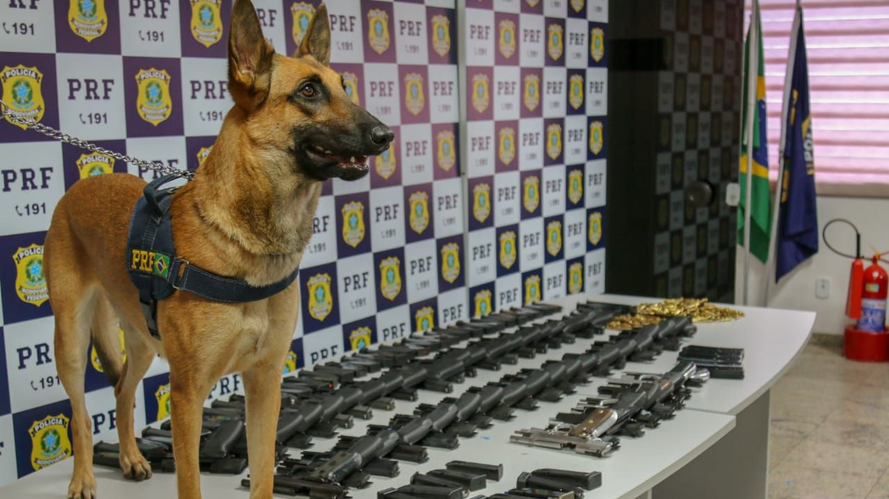 Calibre .762 e 308, de .556. PRF apreende armas e munições que seriam entregues na Região Metropolitana do RJ