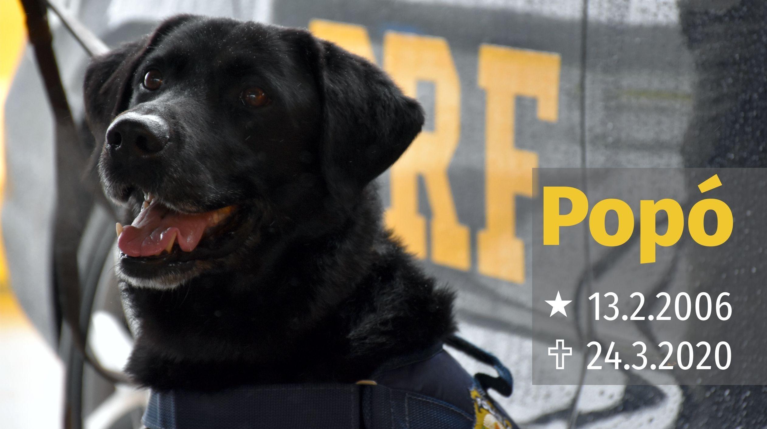 Cão Popó, aposentado, que participou da maior apreensão de drogas da PRF morre aos 14 anos de idade