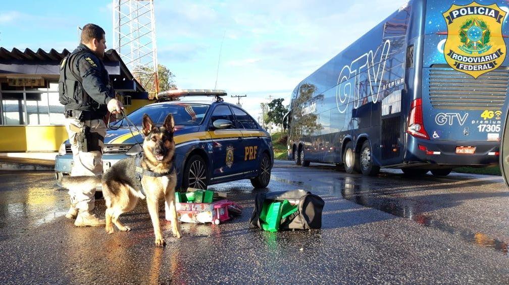Com vídeo: Na BR381, mulher em ônibus da Cometa transportava 27 kg maconha mas CÃES DA PRF acharam!