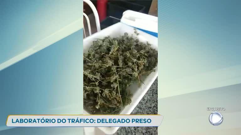 Delegado tinha APARTAMENTO DE LUXO com plantação de maconha bem no meio de Belo Horizonte/MG