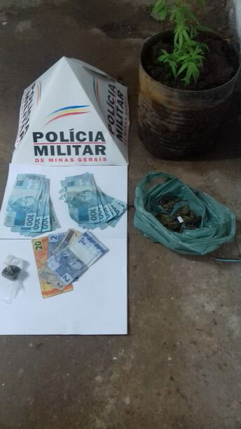 Denúncia leva a polícia a descobrir DOIS PÉS DE MACONHA plantados em casa!