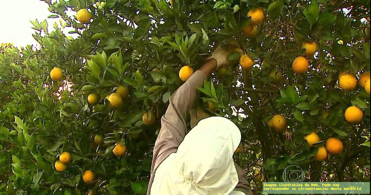Estudo aponta que trabalhadores de lavouras de frutas vivem na pobreza, mas indústrias são CERTIFICADAS