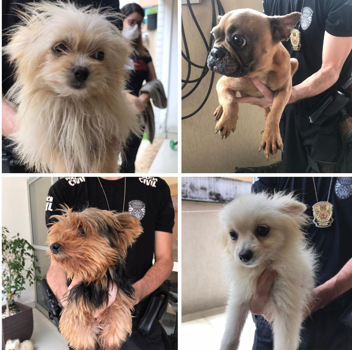 Polícia Civil resgata cães (vários de RAÇA) em situação de maus-tratos região da Pampulha  (BH/MG)
