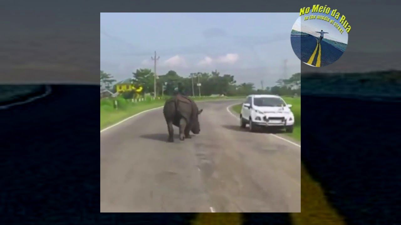 Rinoceronte na estrada... peraí, UM RINOCERONTE ????