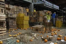 VÍDEO: A cada 2 passos, você acha ALIMENTOS JOGADOS no lixo no CEASA/MG. Retrato do desperdício quando a fome domina o mundo!